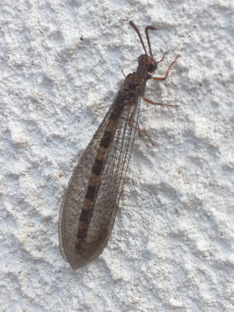 Flyvende insekt