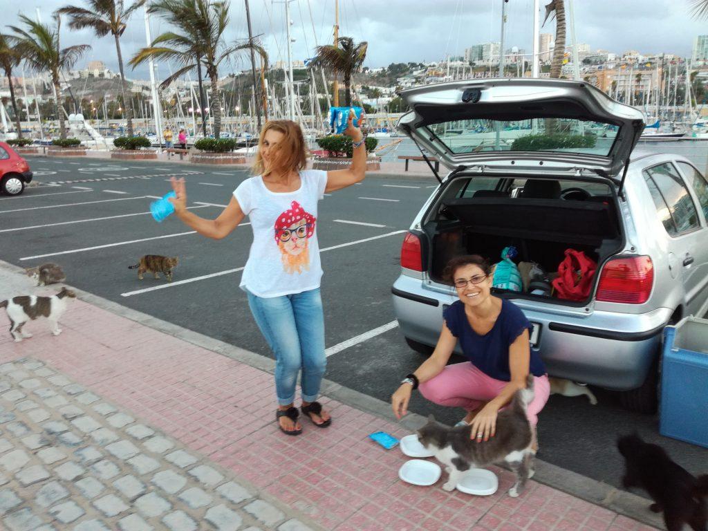 Der fodres ofte katte ved marinaen i Las Palmas
