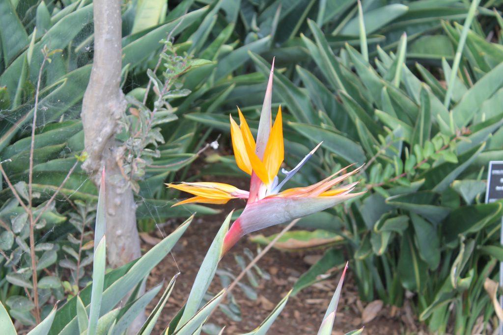 Botanisk Have, Funchal, Madeira