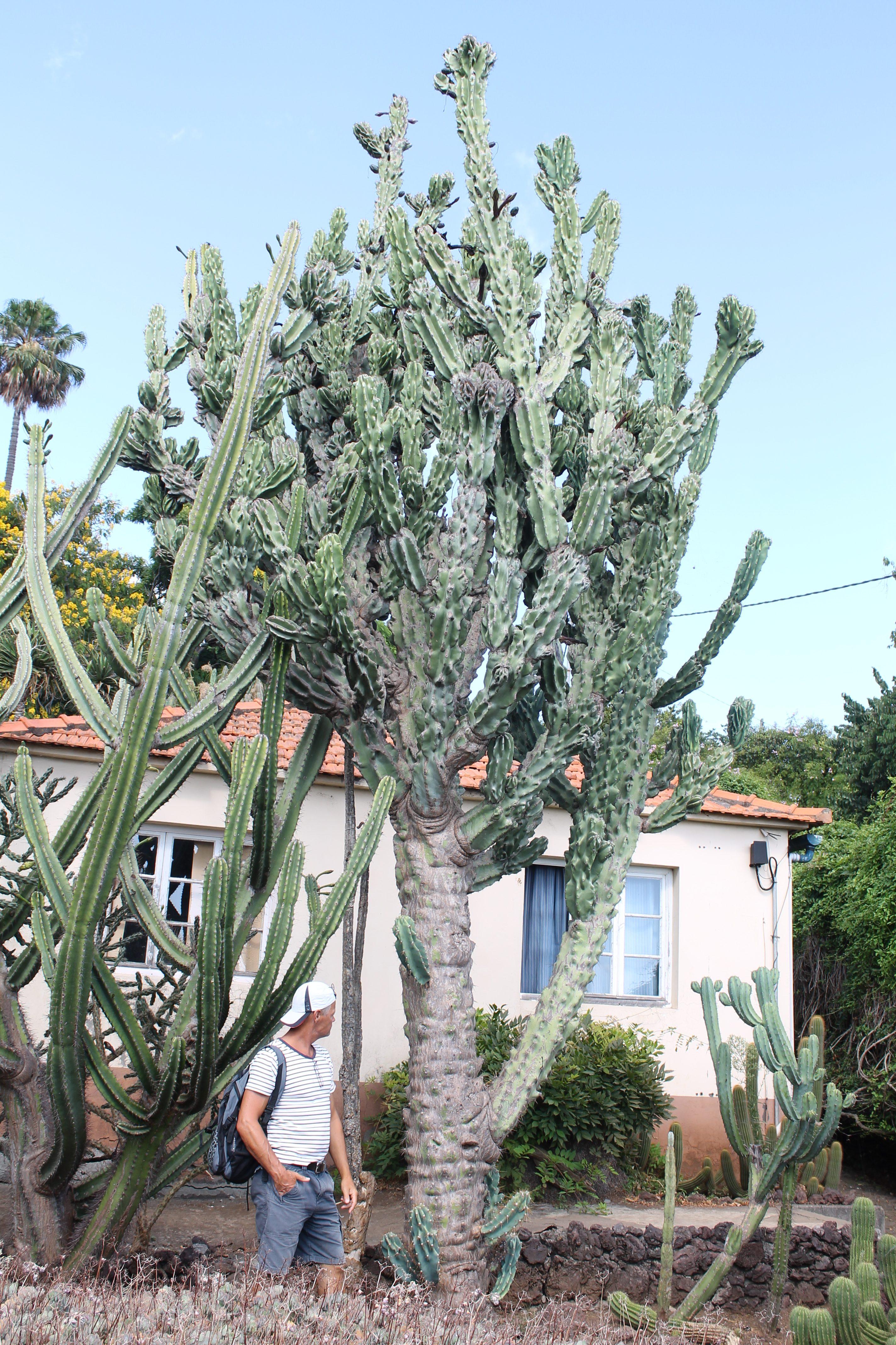 Botanisk Have i Funchal, Madeira
