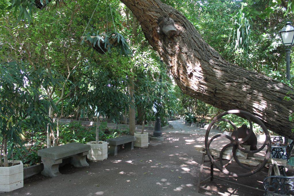 Botanisk Have i Agaete