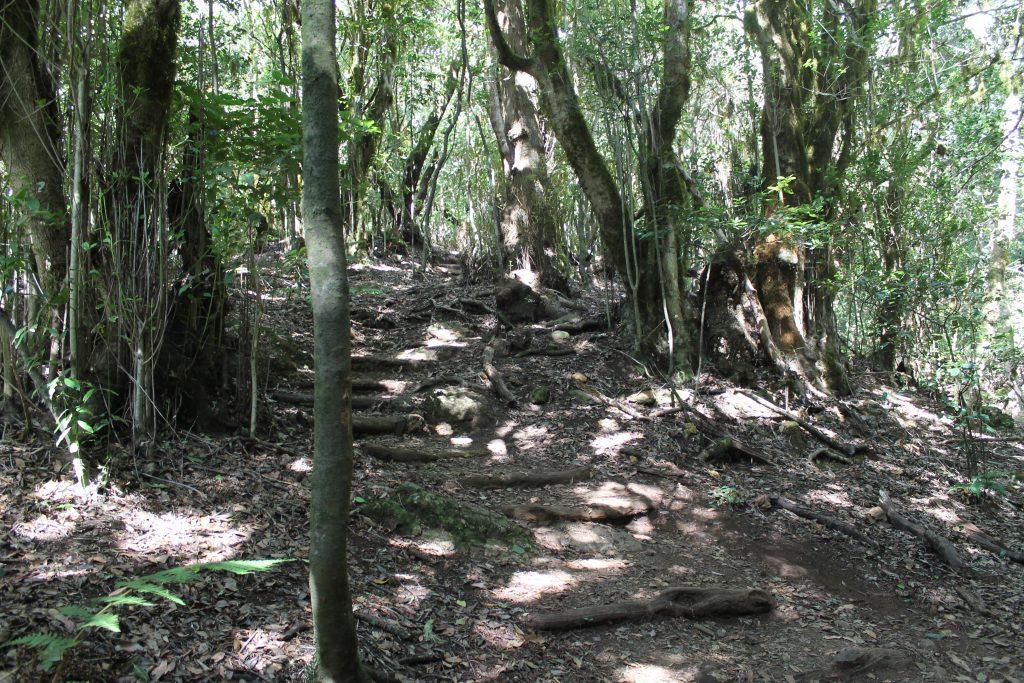 Urskov på La Gomera