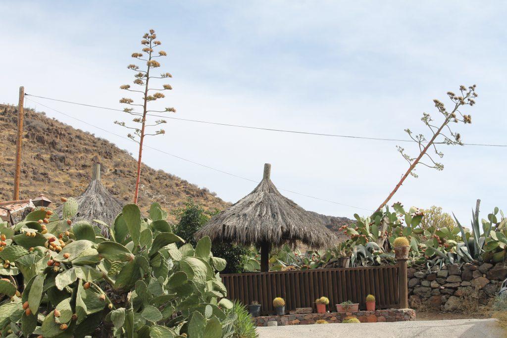 Lokal restaurant på Gran Canaria