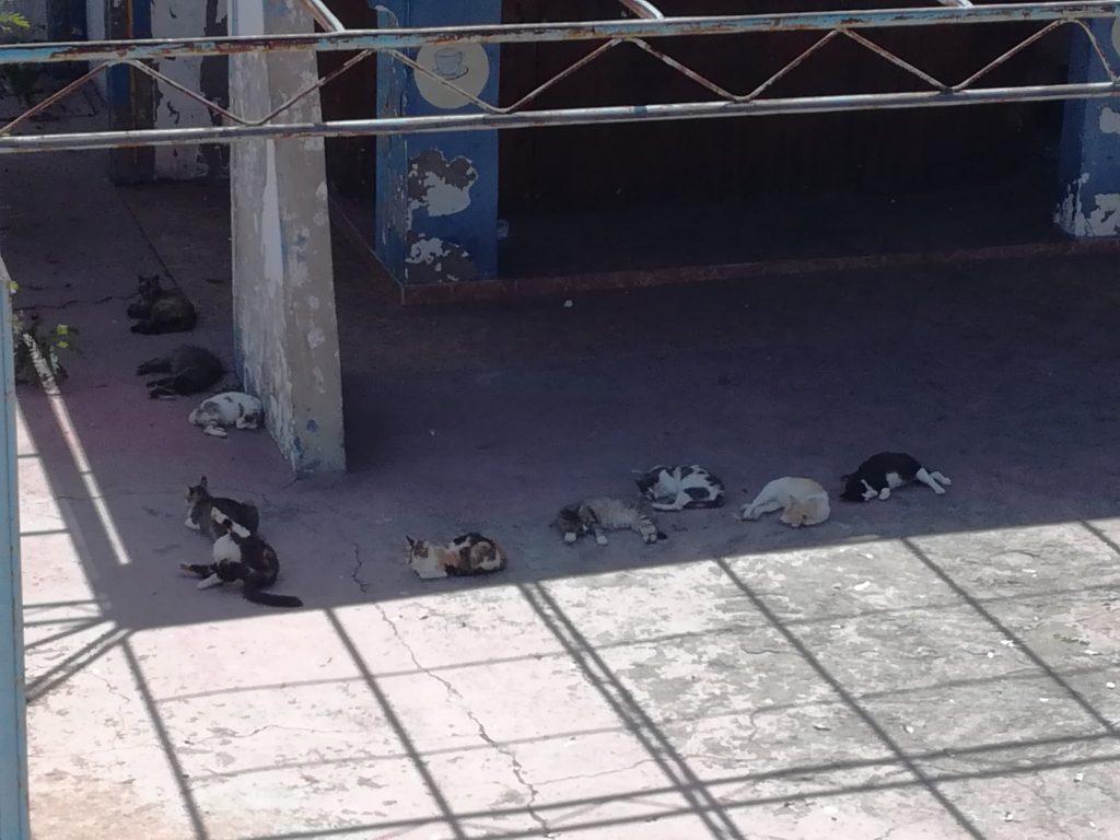 Katte udenfor byens Zoo