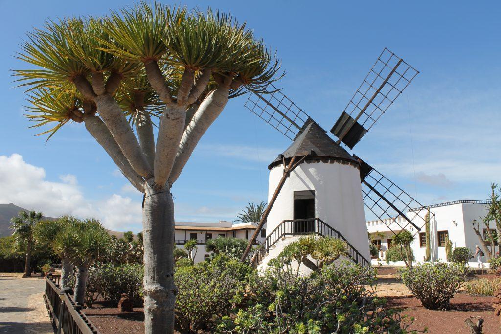 Vindmølle i Antigua