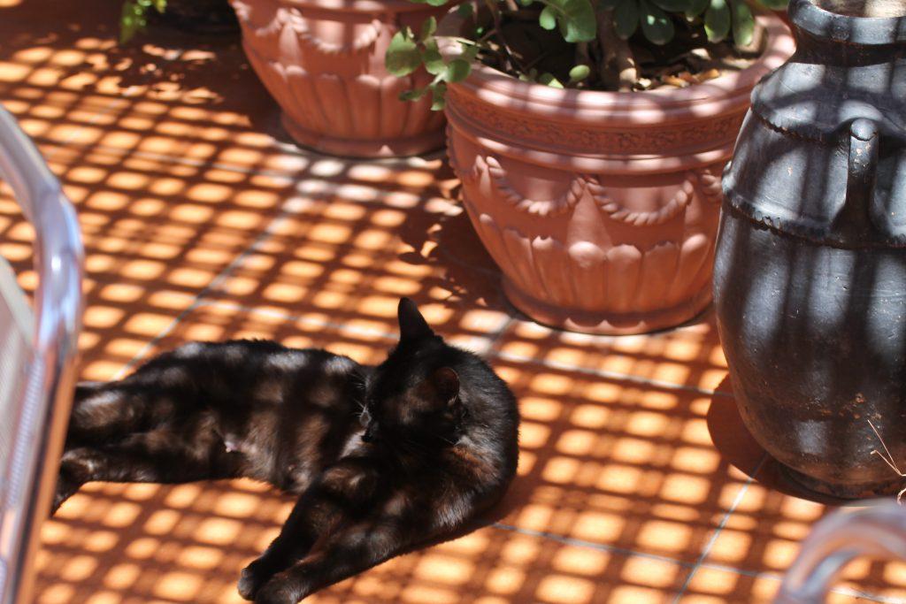 En af restaurantens katte