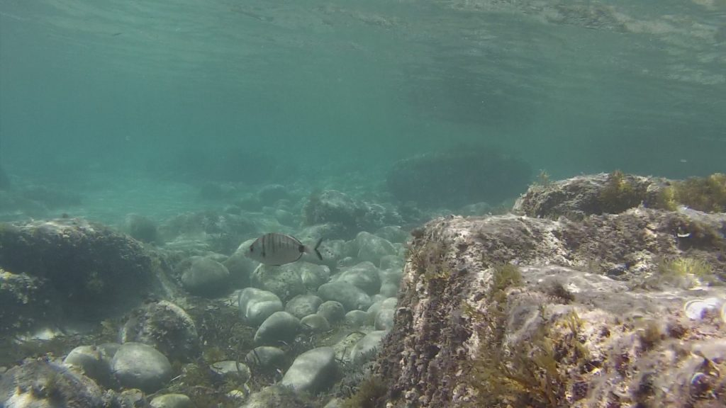 Snorkeltur ved Moraira