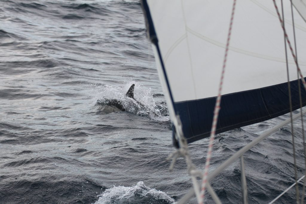 Første delfin på turen