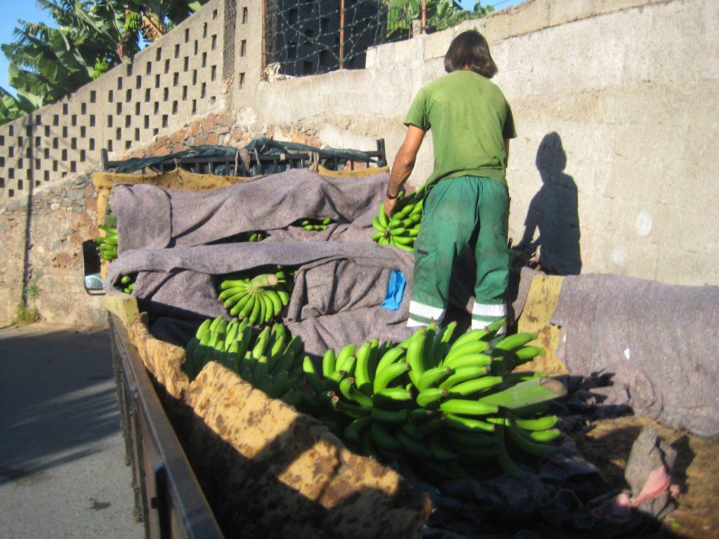 Bananhøst, Madeira