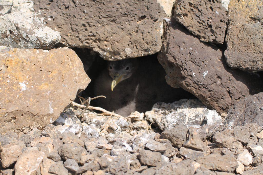 Cagarra, Salvagem Naturreservat