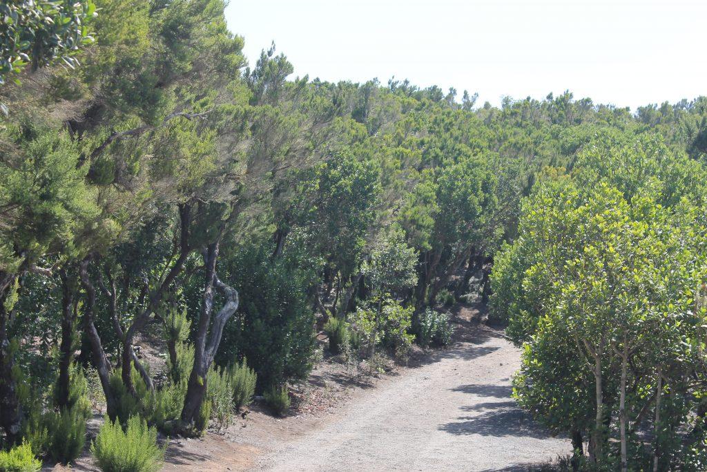 Laurbærtræer på La Gomera