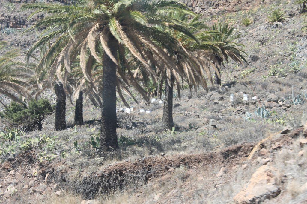Bikuber på La Gomera