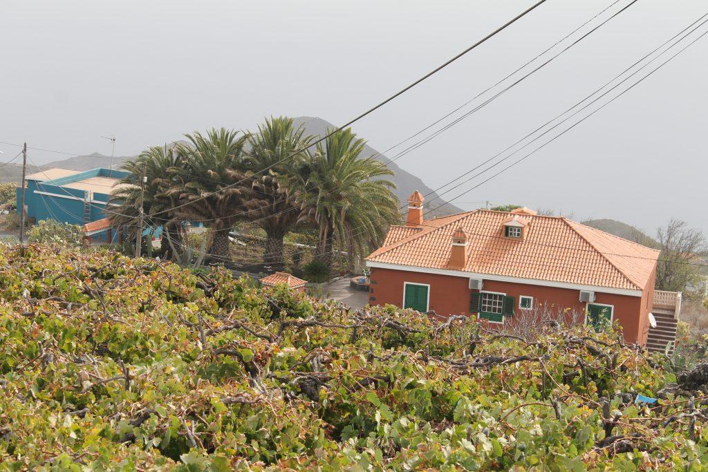 Vin på jorden, La Palma