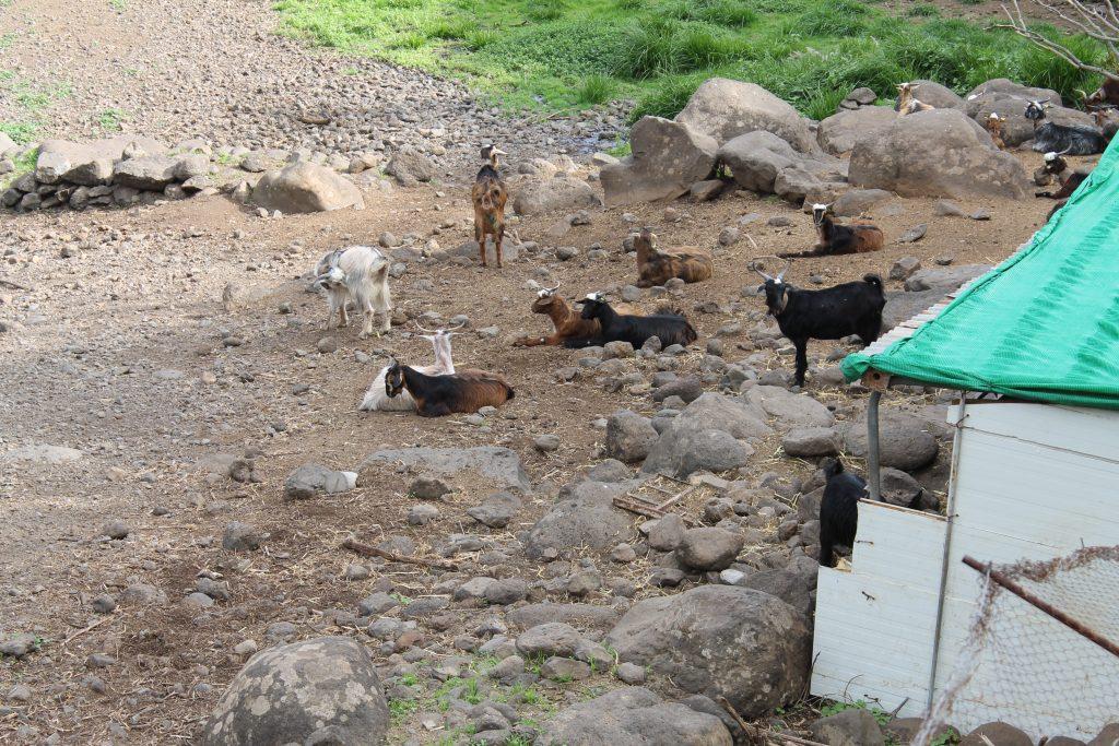 Gedefarm i Santa Cruz