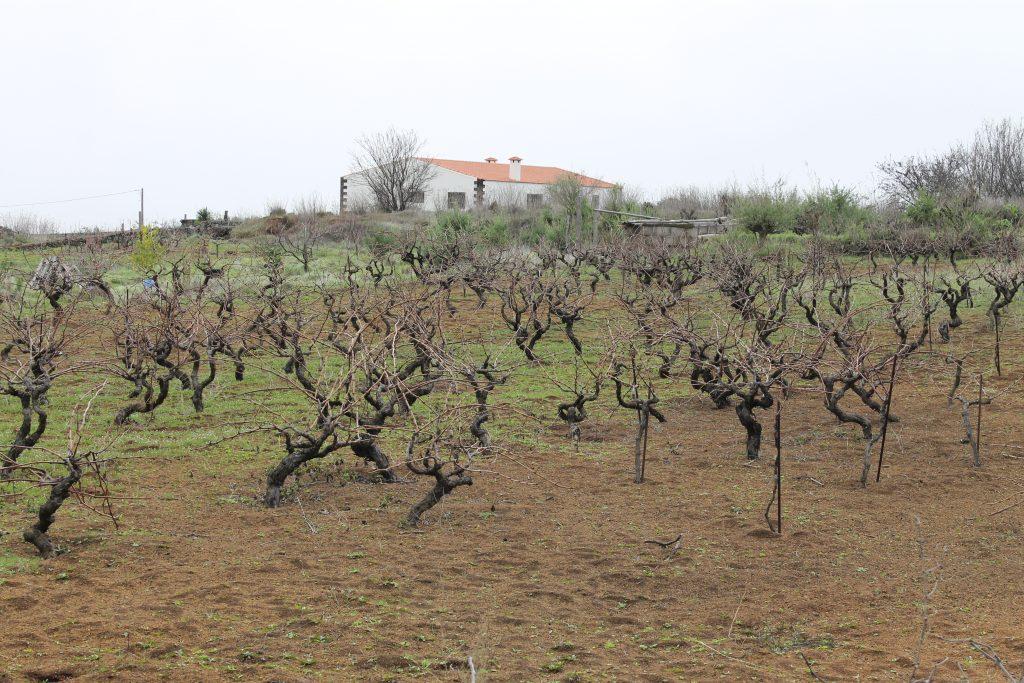 Vin på El Hierro