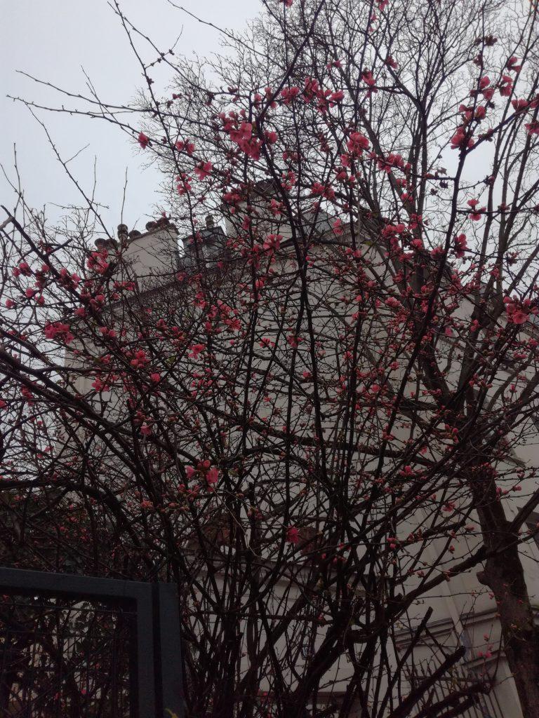 Forår i Paris