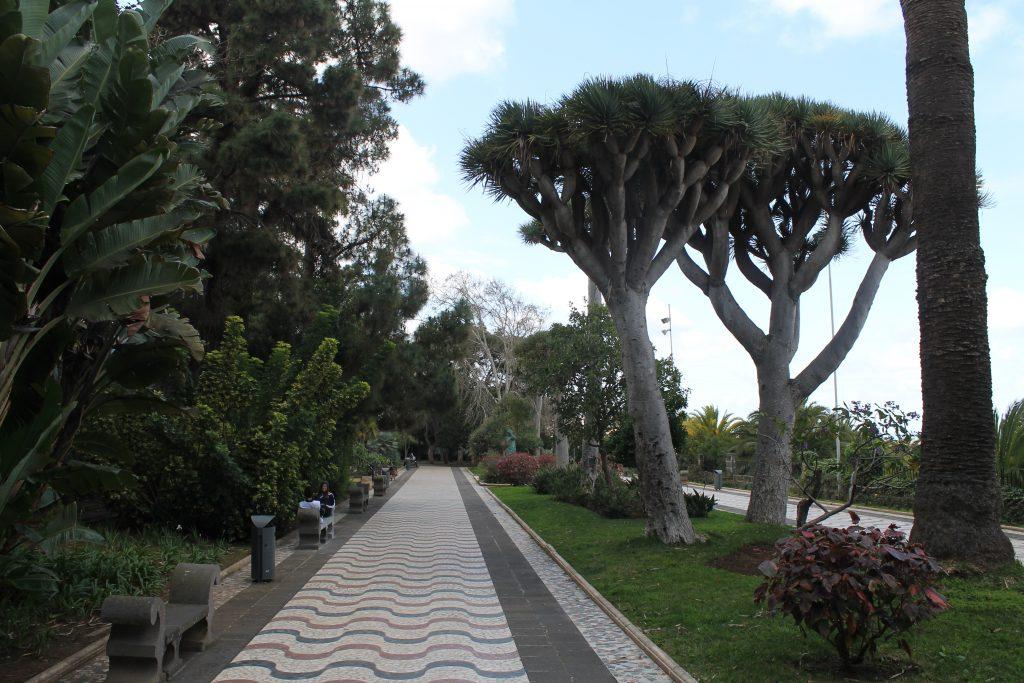 Parken i Arucas, nord Gran Canaria