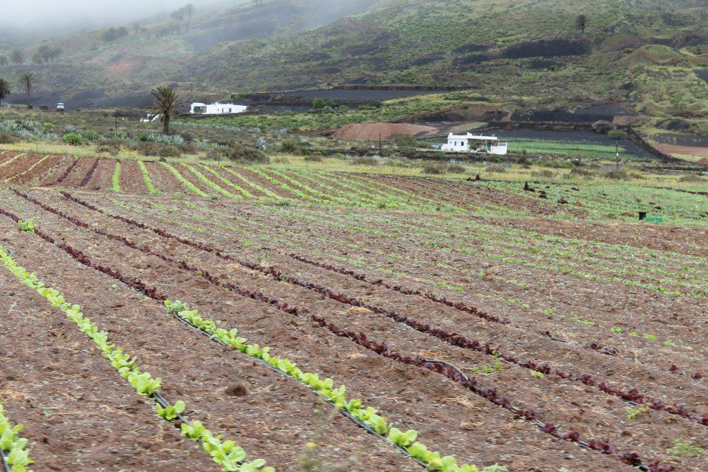Landbrug på Lanzarote