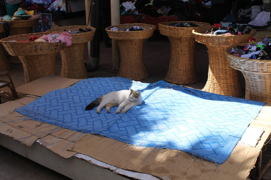 En af Souk'ens mange katte