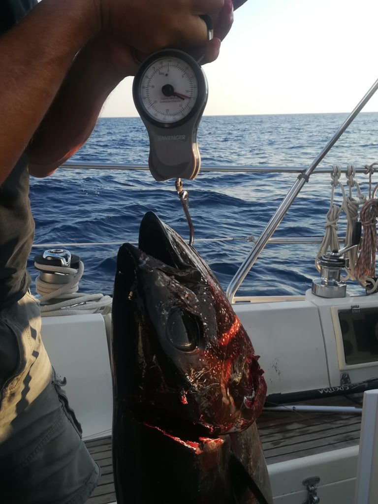 Tunfangst mellem Menorca og Sardinien